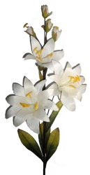 The white Lily in wood